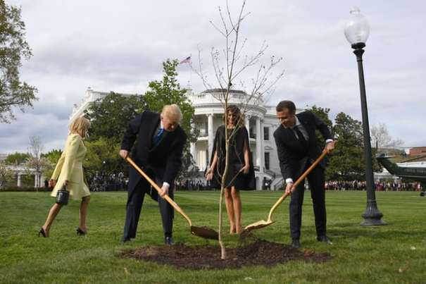TreePlanted